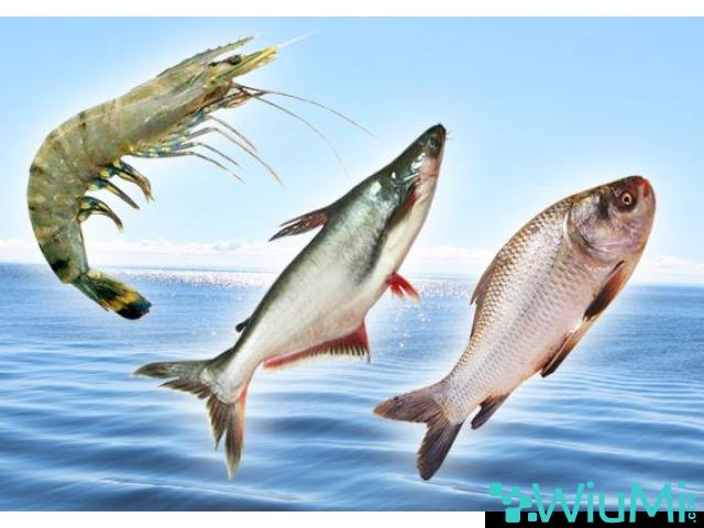Probiotics For Fish Feed | Mineral Mixture Powder For Fishes - 2/5