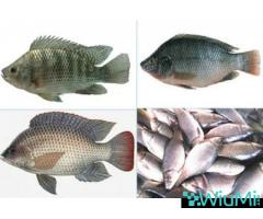Probiotics For Fish Feed | Mineral Mixture Powder For Fishes - Image 3/5