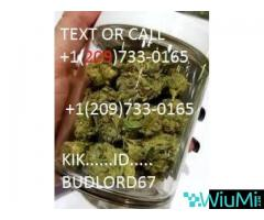 buy Medical Marijuana and Cannabis Oil,CBD OIL,weed,nembutal online