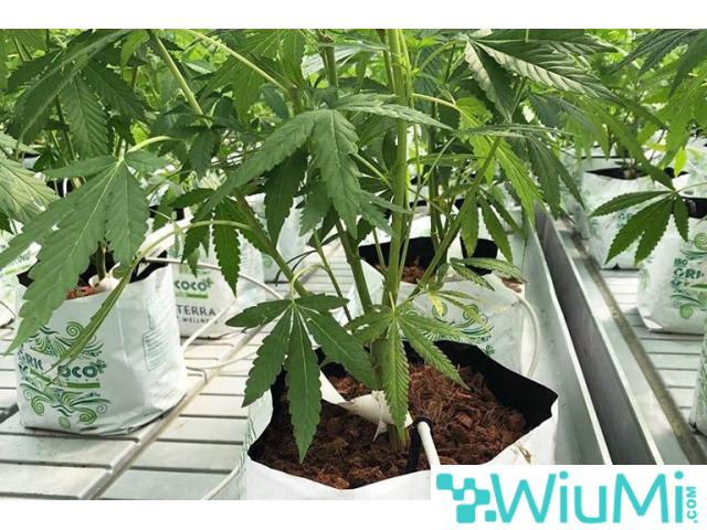 Finding biodegradable coir growing containers for cannabis? Visit Riococo-mmj! - 1/4