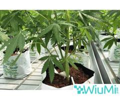 Finding biodegradable coir growing containers for cannabis? Visit Riococo-mmj! - Image 1/4