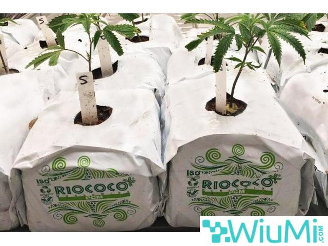 Finding biodegradable coir growing containers for cannabis? Visit Riococo-mmj! - 2/4