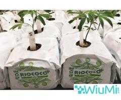 Finding biodegradable coir growing containers for cannabis? Visit Riococo-mmj! - Image 2/4