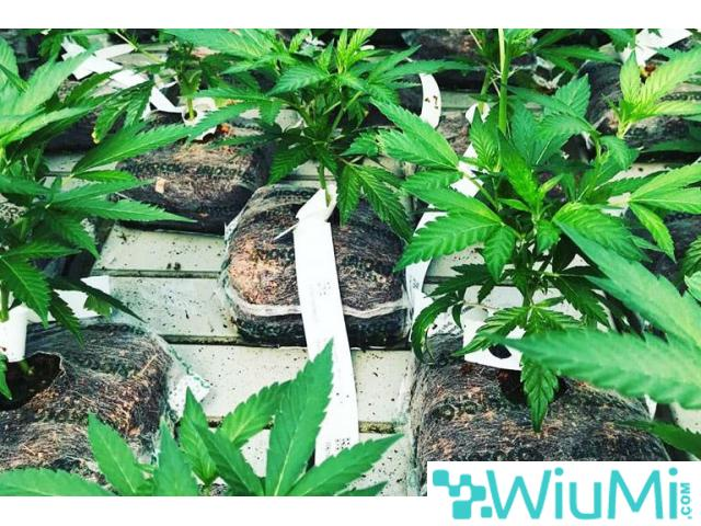 coir growing containers for cannabis - 1/4