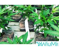 coir growing containers for cannabis - Image 1/4