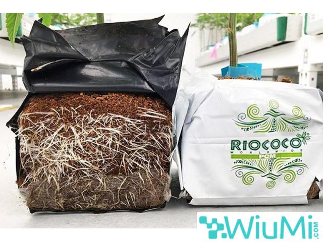 coir growing containers for cannabis - 3/4