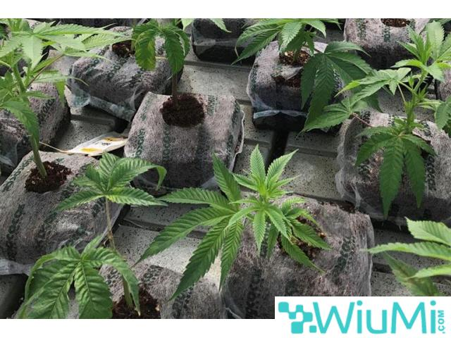 Eco-Friendly Medium for Growing Marijuana – The OMRI Certified Coir Products - 1/4